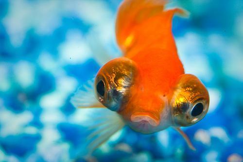 Como limpar o aquário?