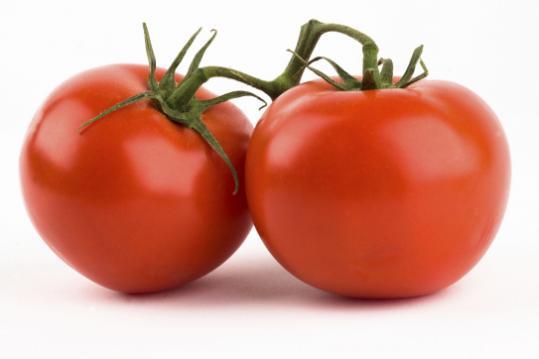 Como Regar o Tomate