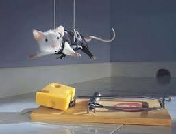 Como treinar o seu rato de estimação!