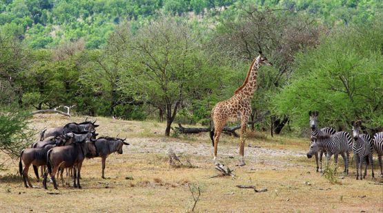Contemple a maior concentração de vida selvagem do mundo na Tanzânia