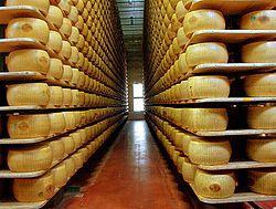Cultura dos queijos