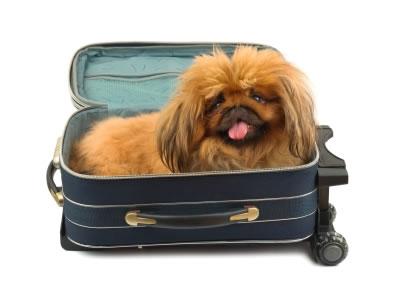 Dê umas férias ao seu cão