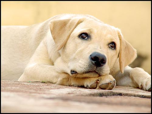 Desvendando mitos caninos