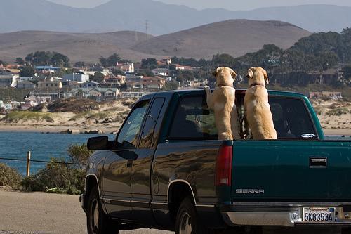 Dicas para viajar com o seu cão