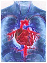 Doenças Circulatórias