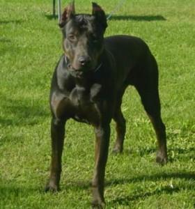 É possível evitar o ataque de cães?