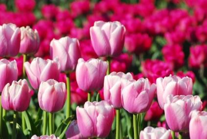 Festeje a Primavera na Festa da Flor