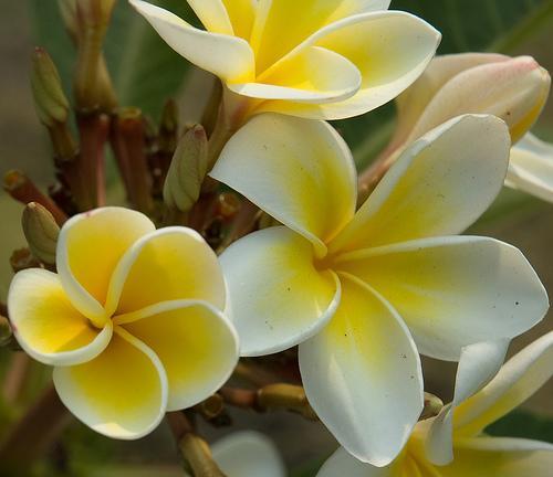 Flores indicadas para diferentes tipos de cerimónias