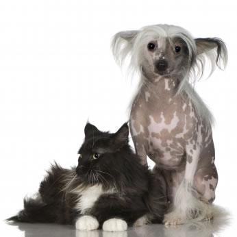 O gato e o cão