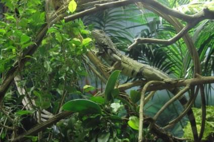 História do Amazônia