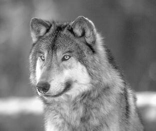 Idade da loba - Mulher de 40: Aprenda a lidar consigo para viver feliz