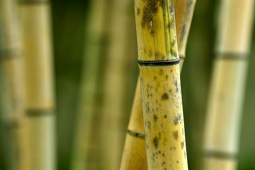 Molduras de bambu
