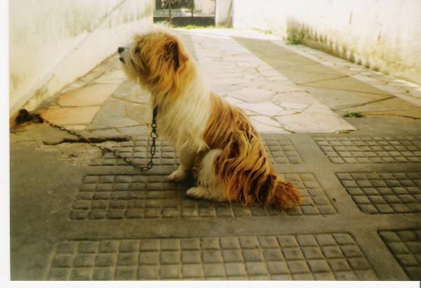 O Estimado cão Faísca.