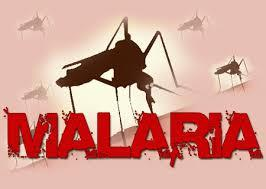 O Que É Malária E Suas Causas