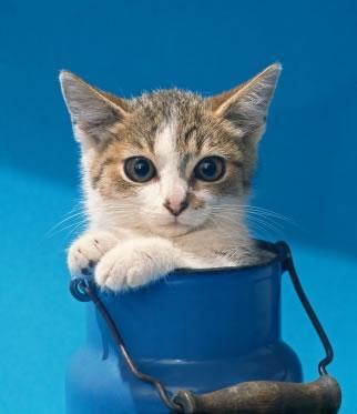 Saiba banhar seu animal de estimação