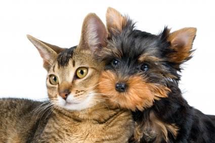 Saiba como controlar os carrapatos em seu animal