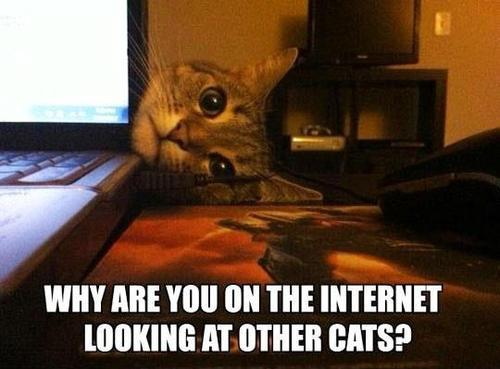Será que gatos sentem inveja?