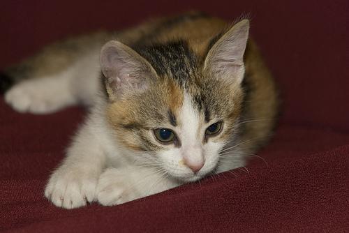 Sofá para cães e gatos