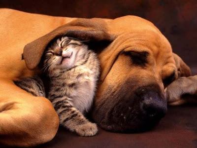 Uma Bela Amizade É Fundamental